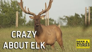Download Elk Farming ″Crazy About Elk″ | Deer & Wildlife Stories Video