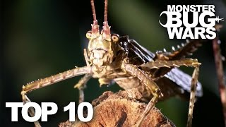 Download TOP 10 BUG FIGHTS | MONSTER BUG WARS Video