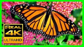 Download The Best Relaxing Garden in 4K - Butterflies, Birds and Flowers🌻🐦 2 hours - 4K UHD Screensaver Video