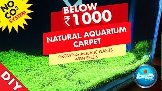 Download How to Make Aquarium Carpet    Growing Aquatic Plants With Seeds    Planted Tank Video