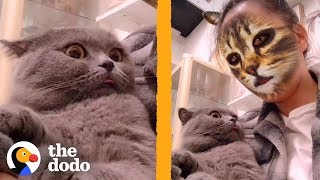 Download These Cats Don't Know How to React to This Cat Face Filter | The Dodo | The Dodo Video