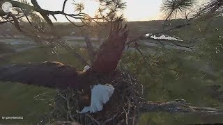 Download SWFL Eagles. ~ A Branch To Secure The Nest Rail, by Harriet. Watch Up, M! Slo - Mo Video