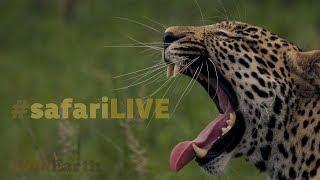 Download safariLIVE - Sunrise Safari - Oct. 16, 2017 Video