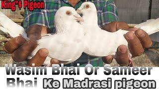 Download WASIM BHAI OR SAMEER BHAI KE MADRASI PIGEON.BHIWANDI MAHARASTARA. Video