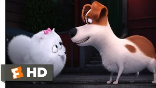 Download The Secret Life of Pets - You're In Love Scene (9/10) | Movieclips Video
