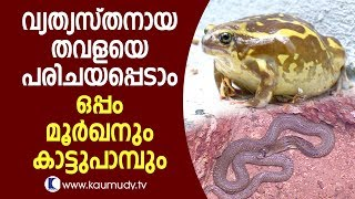 Download Wow! Here comes a unique frog; also a cobra and a wild snake | Snake Master Video