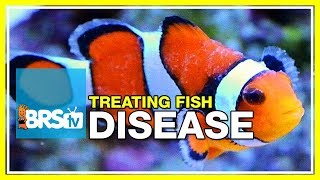Download Week 51: What you need to know to cure fish disease & parasites   52 Weeks of Reefing #BRS160 Video