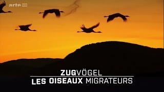 Download Les Oiseaux Migrateurs : Leur Combat Pour La Survie [HD] Video