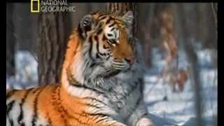 Download LOS ANIMALES MAS PELIGROSOS DEL MUNDO - 5 - ASIA Video