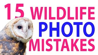 Download 15 Wildlife Photo Mistakes 😱 Video
