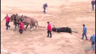 Download Last bullfight in Barcelona bullfighting in the Catalonia region of Spain has ended Video