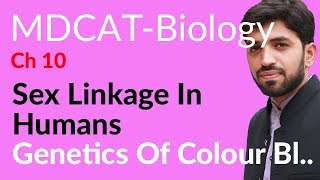 Download MDCAT Biology, Entry Test, Ch 10, Genetics of Colour Blindness - Chapter 10 Genetics Video