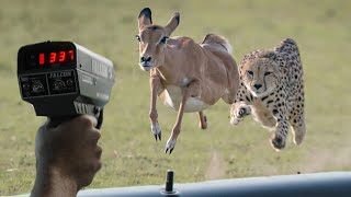 Download These Are 10 Fastest Animals On This Planet Video