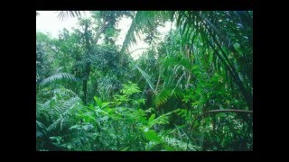 Download الغابات المطيرة -صوت الطبيعة - ثلاثي الابعاد Video