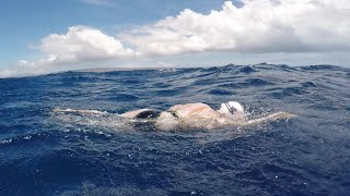 Download Woman survives shark scare during solo swim of Ka'iwi Channel! Video