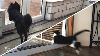 Download Cats and Dogs vs. Glass Doors Compilation [NEW] Video