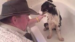 Download Border Collie Rescue Episode 1 - the Tale of Mo Video