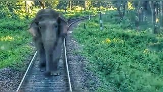 Download Elephant attacks Passenger Train Video
