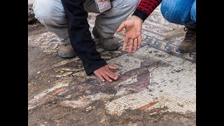 Download Remarkable mosaic was discovered in archeological excavations in the Caesarea National Park Video
