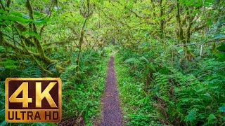 Download Walking in the Woods - 4K UHD Relaxation Video with Bird Singing and Forest Sounds - 20 minutes Video