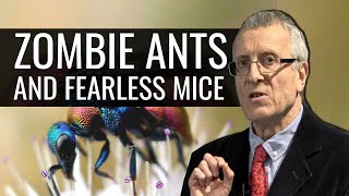 Download Zombie Ants and Fearless Mice: Parasites and the Brain Video