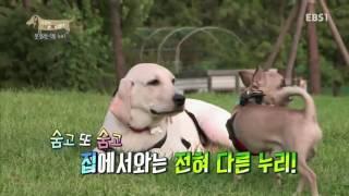 Download 세상에 나쁜 개는 없다 - 퍼피특집 우리 강아지가 달라졌어요 #002 Video