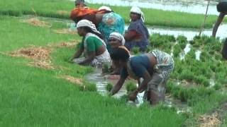 Download Indian Village Life.First part:South India- Full HD Video