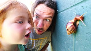 Download MY PET SNAIL!! New Morning Routine catching bugs with Adley in Hawaii Video