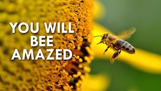 Download The Amazing World of Bees Video