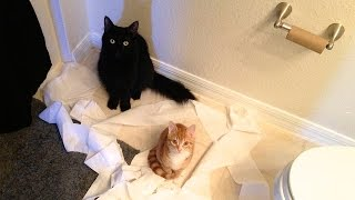 Download CAT LOGIC Video