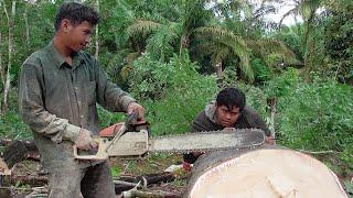 Download Potong Kayu Karet Besar - Cah Kerjo Pakai Sinso ~ Wong Kerjo Video
