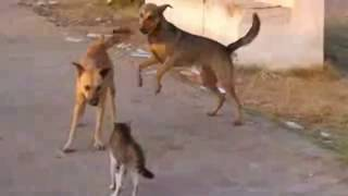 Download Angry Cats Vs Dogs Funny Compilation Video Ever| cats and dog Fight|My Way Video