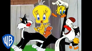 Download Looney Tunes | I Taut I Taw a Putty Tat! | Classic Cartoon Compilation | WB Kids Video