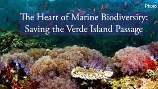 Download The Heart of Marine Biodiversity Saving the Verde Island Passage Highlights Video