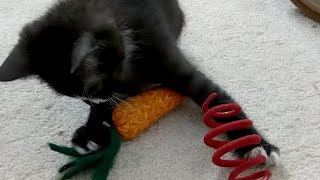 Download News And Kittens! 2017-11-14 Video