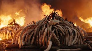 Download Anthropocene: The Human Epoch - Trailer - SFF 19 Video