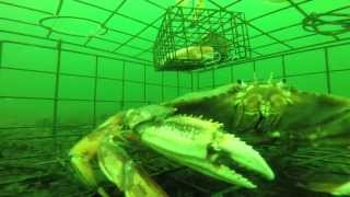 Download Never before seen underwater footage of a Crab Trap at 80ft with a GoPro Video