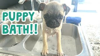 Download CUTEST PUPPY BATH EVER!! Video