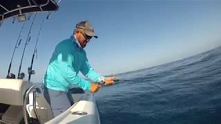 Download Tsunami slow pitch jigging rod and Forged 10 reel Video