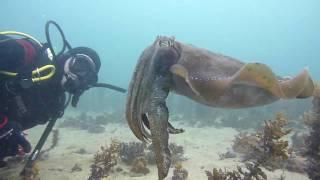 Download Rosebud Reef, Melbourne, Victoria, Australia by NetBookings.au Video