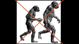 Download CARTA: The Upright Ape: Bipedalism and Human Origins - Carol Ward: Early Hominin Body Form Video