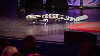 Download A robot that runs and swims like a salamander   Auke Ijspeert Video