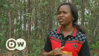 Download Reforesting Nigeria before it's too late | DW English Video