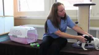 Download How to care for your kitten so they become a happy, friendly and well-behaved cat. Video