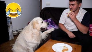 Download What does My Dog do when I Eat Sandwich - Bailey Steals Food Video