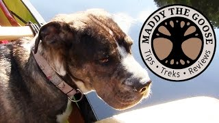 Download Introducing... Lou! - (1 of 10) 5 Day Solo Canoe Trip with Dog Video
