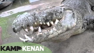 Download World's Largest Crocodile in Captivity : Kamp Kenan S3 Episode 10 Video
