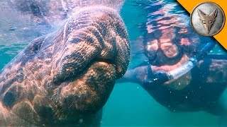 Download Swimming with Giants! Video