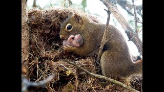 Download Did you KNOW? Squirrels adopt babies. Video