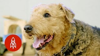 Download The Doctor Studying Your Dog's Brain Video